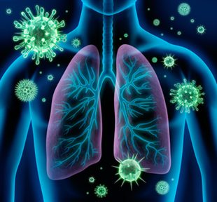 The Lungs are Often Targeted by Bacteria.